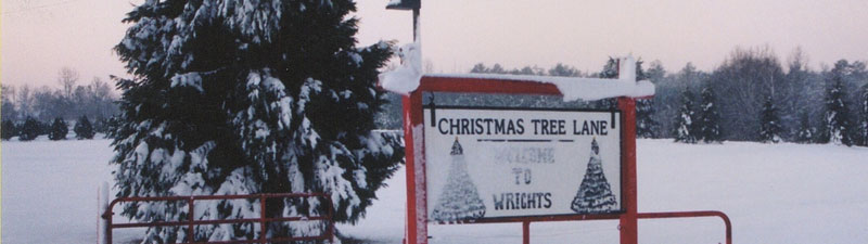 Picture of Wright's Tree Farm during snow